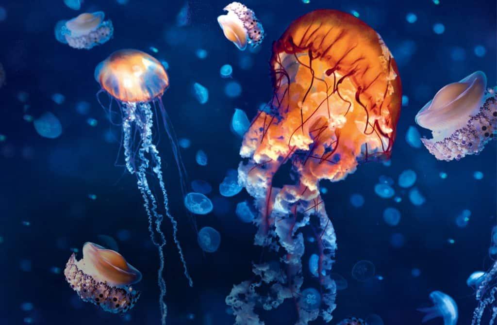 Sealife_Header_jelly_1170