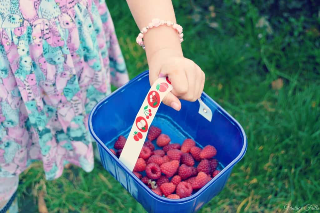 Raspberry-Picking-Garsons-Farm-1024x682