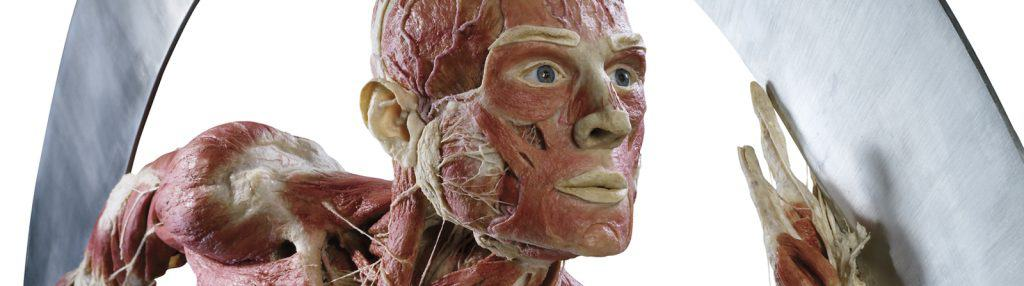 1-Copyright-Gunther-von-Hagens-BODY-WORLDS-Institute-for-Plastination-Heidelberg-Germany-wwwbodyworldscom
